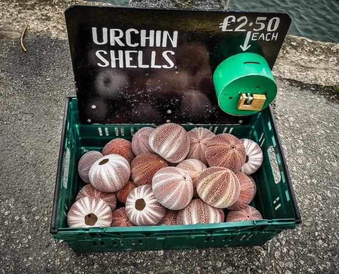 Urchin Shells